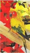 image-article-oiseau-60743.jpg