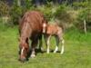 horses-2109013-640-159821.jpg