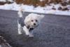 dog-1127321-640-148403.jpg