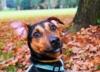dog-543078-640-159243.jpg