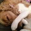 cat-and-dog-775116-640-151450.jpg