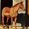 horse-1037962-640-152078.jpg